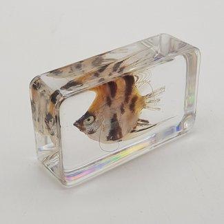 Fish in resin (5x4)