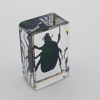 Green beetle in resin (3x4)