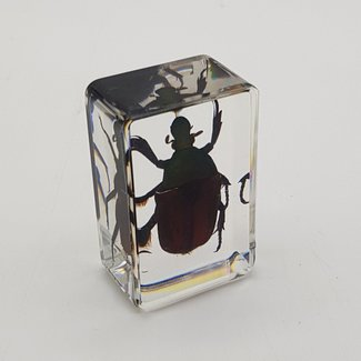 Green&red beetle in resin (3x4)