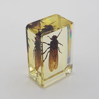Insect in resin (3x4)