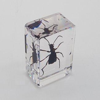 Bug in resin (3x4)