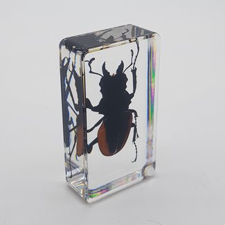 Big beetle in resin (7x4)