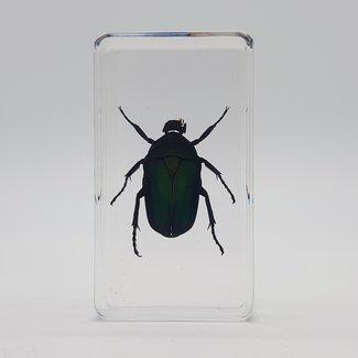 Big green beetle in resin (7x4)