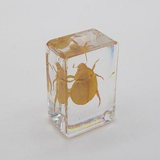 Golden beetle in resin (3x4)
