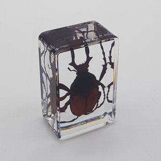Dung beetle in resin (3x4)