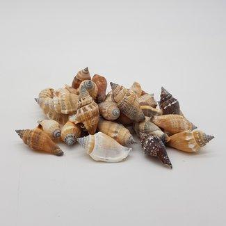 Mixes shells B