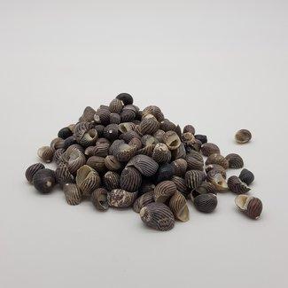 Mixes shells D