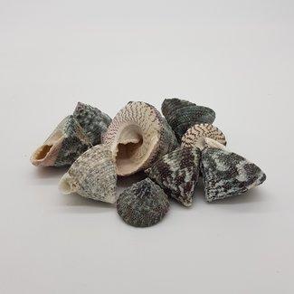 Mixes shells E