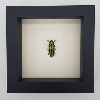 "Beetle framed (6.3"" x 6.3"")"