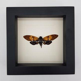 "Cicada framed (6.3"" x 6.3"")"