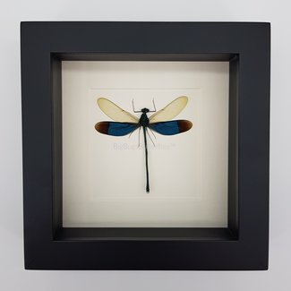 "Dragonfly framed (6.3"" x 6.3"")"