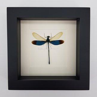 Libelle in lijst (16x16)