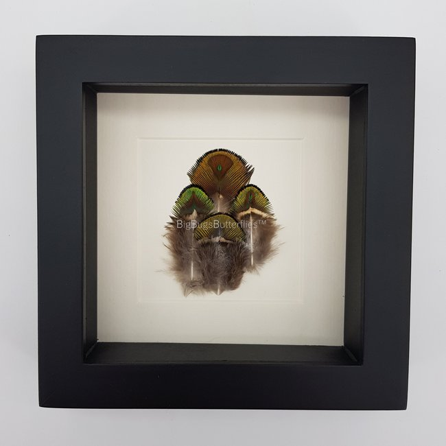 """4 real feathers in frame (6.3""""x6.3"""")"""