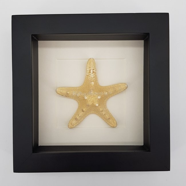 Starfish in frame (16x16)