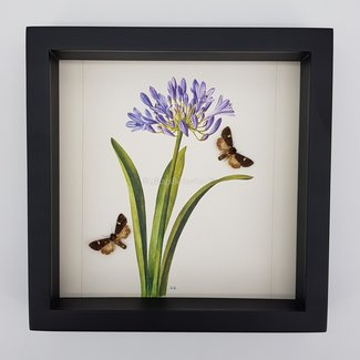 Real moths in frame with a print in the background (25x25)