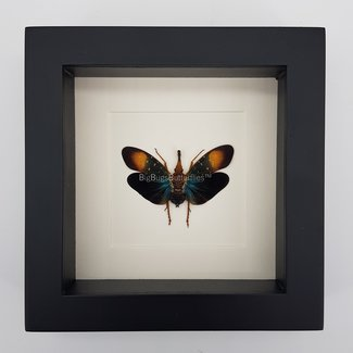 Insect in lijst (16X16)
