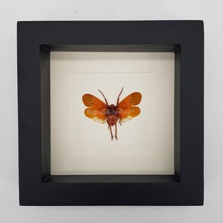 """Insect framed (6.3"""" X 6.3"""")"""