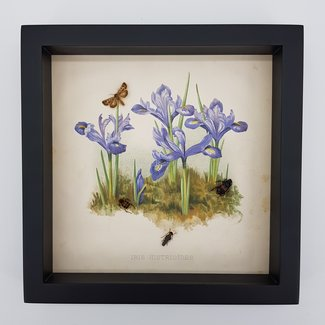Real insects in frame with a print in the background (10''x10'')
