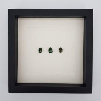 "3 beetles framed (10"" X 10"")"