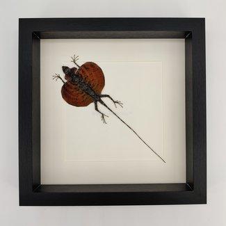 """Flying dragon lizard framed (10"""" x 10"""")"""