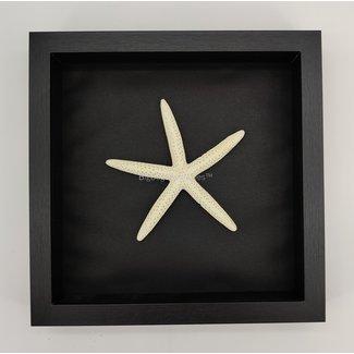 "Starfish framed (10"" X 10"")"
