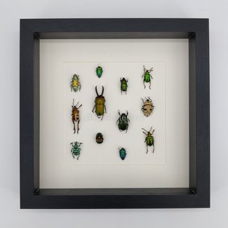 """Framed insect mix (10""""x10"""")"""