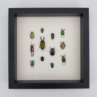 Insecten mix in lijst