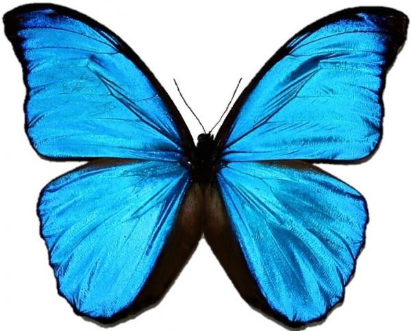 Opgezette vlinders en insecten in stolp en lijst