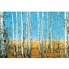 Glasschilderij berken 120 x 80 cm
