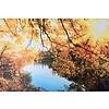 Terhalle Aluminium schilderij Zon en bladeren 120x80 cm