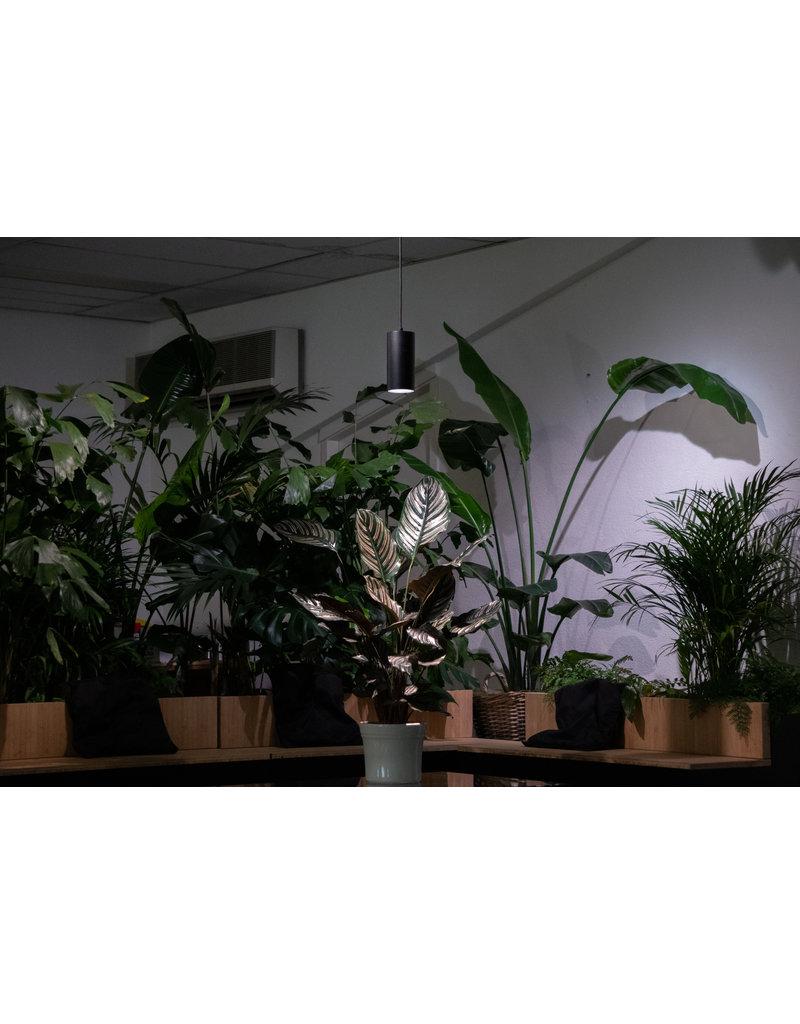 Plantlight Solutions DYLAN pendant