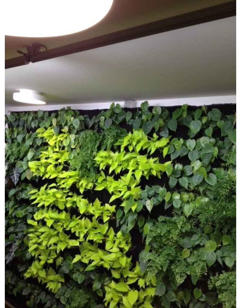 Parus Plant Light Living Wall LED for green wall application