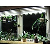 Parus Plant Light Window Silk or Office lighting 1500mm