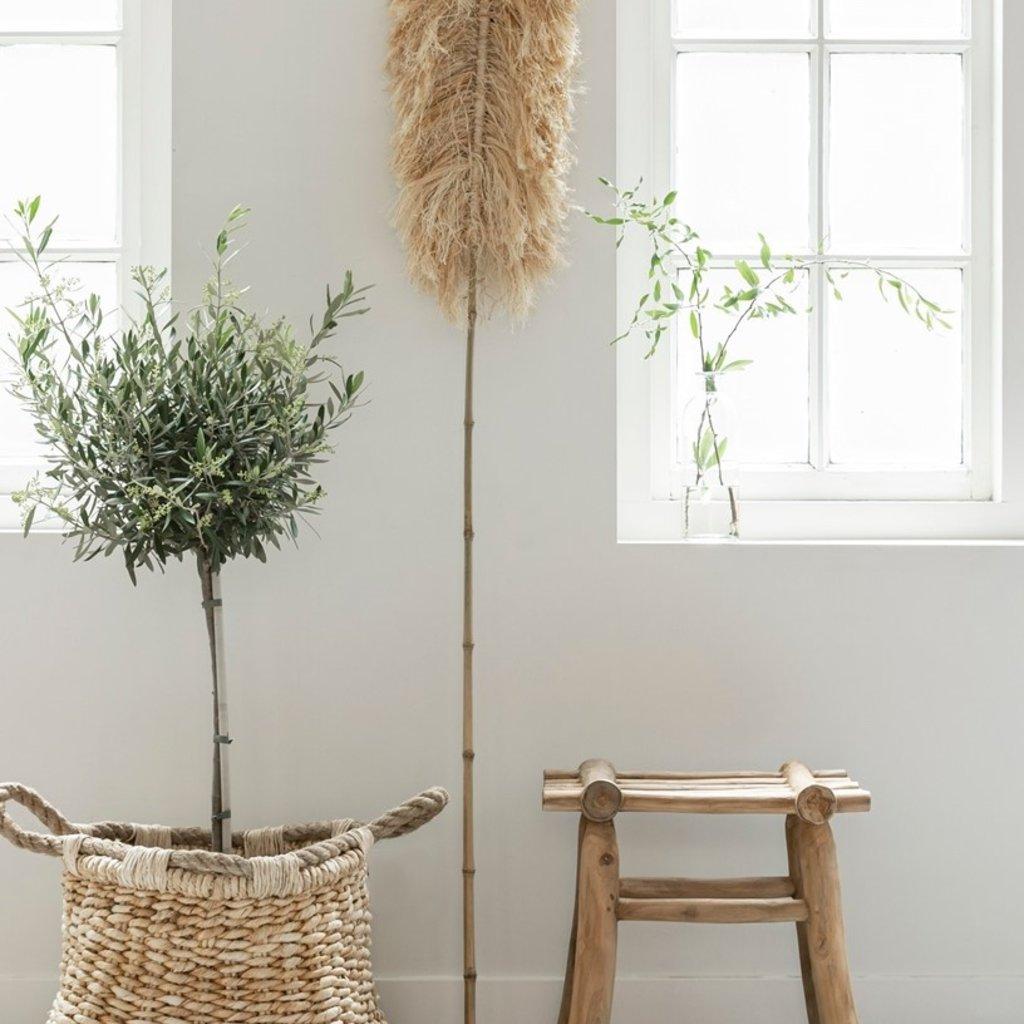 DTP Interiors Sisal Leaf - 175 cm. hoog