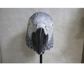Parrot mask (bird) gray
