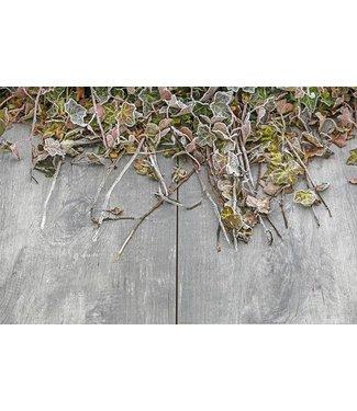 Timber Grigio Geoceramica 30x60x4 cm