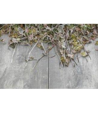 Timber Grigio Geoceramica 80x40x4 cm