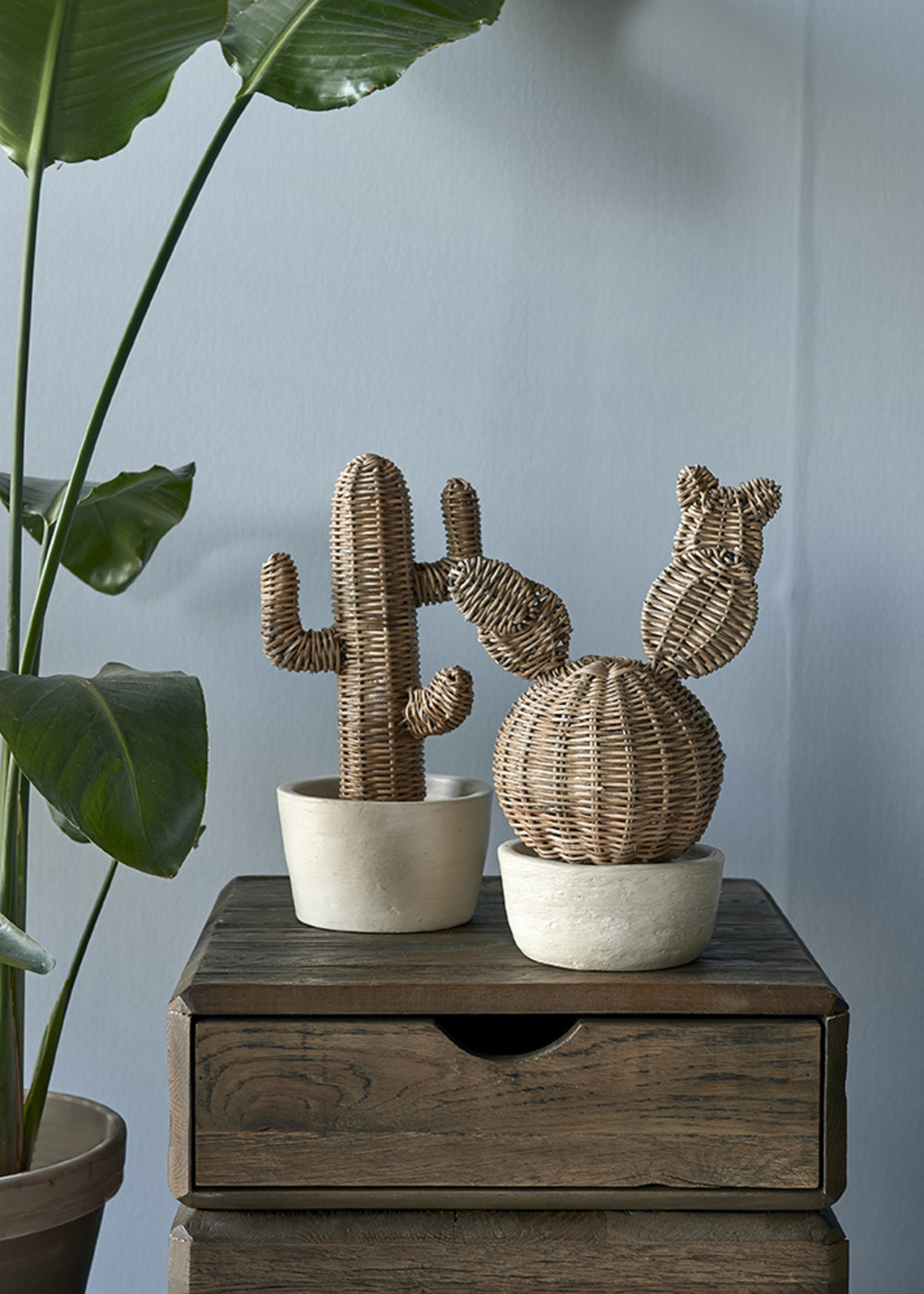 Riviera Maison Rustic Rattan Prickly Pear Cactus