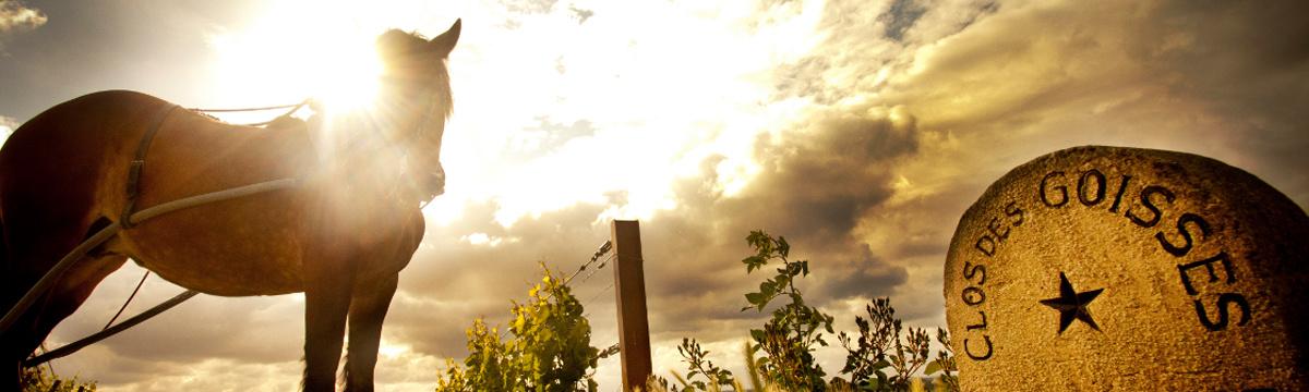 Moncaro vineyards