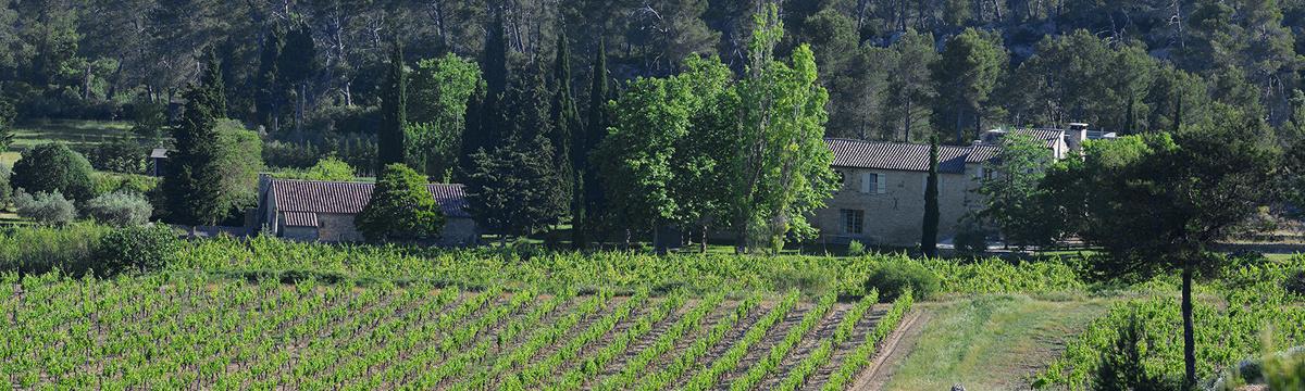 Domaine de Trevallon Vineyards