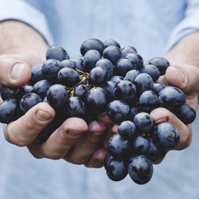 La Sala grapes