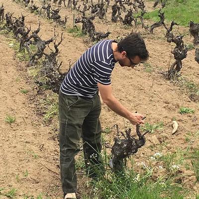 Masintin Vinos - Loco Diego