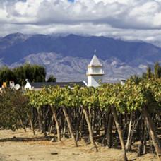 Argentijnse wijn