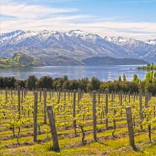 Nieuw Zeelandse wijn