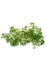 Mulberry Paper cress seeds, 50 sheets