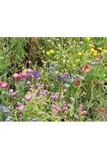 Maulbeerbaumpapier wilden-Blumensamen, 100 Blatt