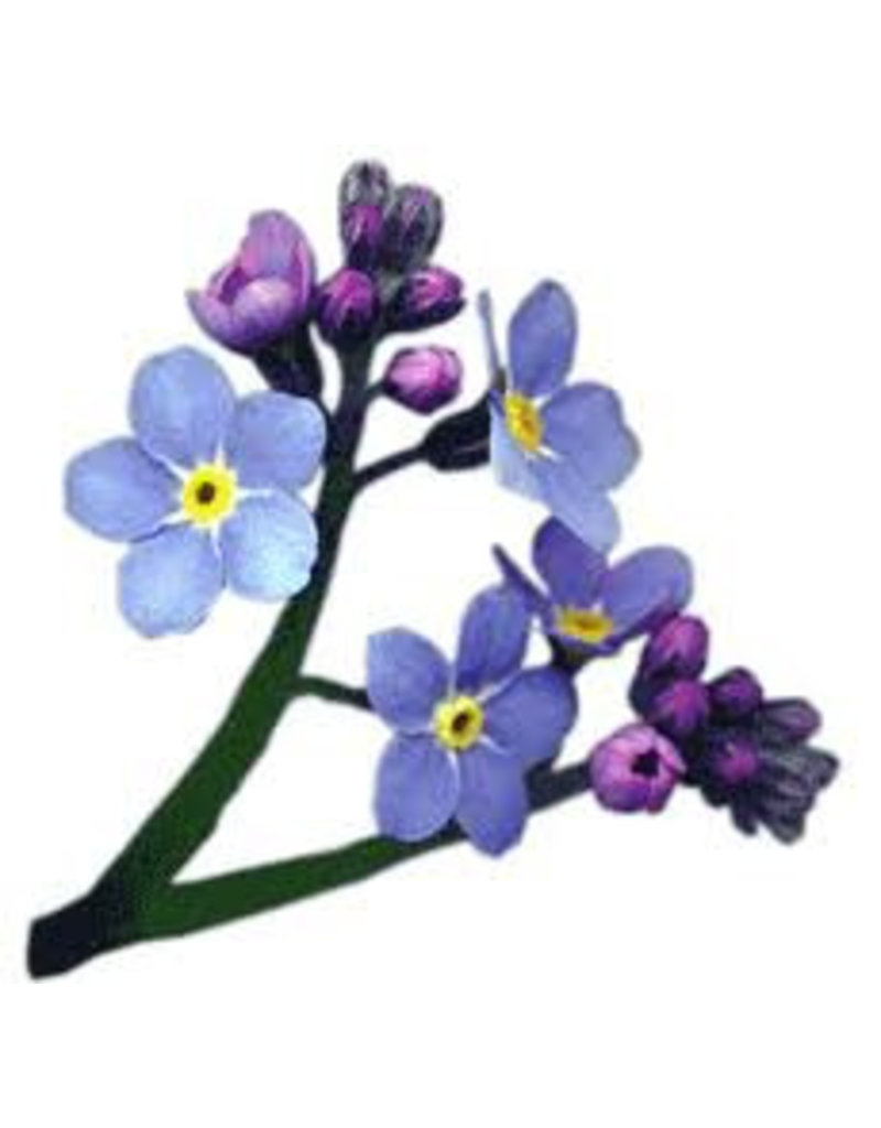 Mulberry forget-me-not, per 100 sheets