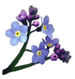A4D96 Mulberry forget-me-not, 50 sheets