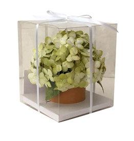 TH017 Fleurs  dans un pot de fleurs.