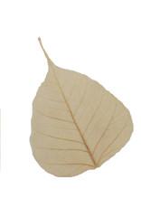 25 feuilles de bodhi